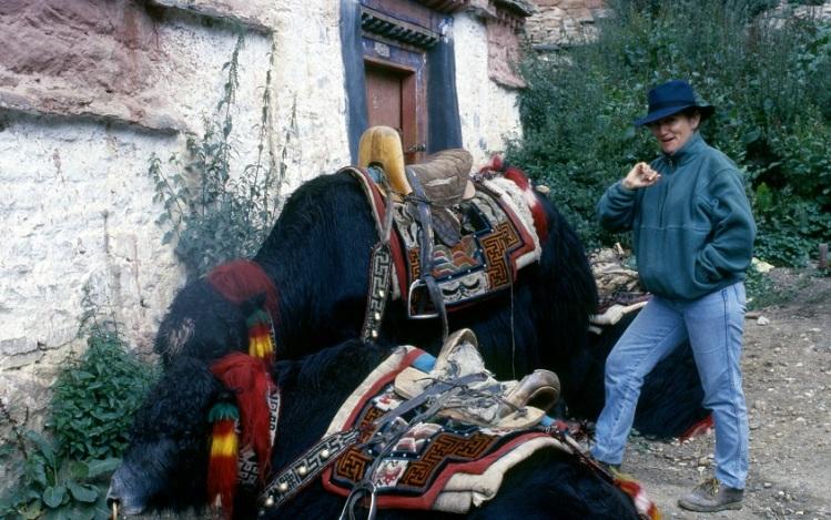 Tibet Mediana